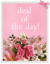 Deal of the Day Designers Choice Fresh and beautiful product of the day