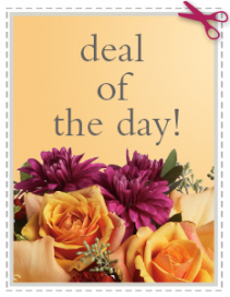 Deal of the day Everyday