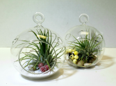 Deck the Halls! Ornamental Hanging Air plants