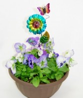 DECORATED PANSY BOWL Container garden