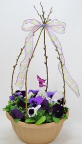 Pussy Willow Pansy Bowl Flowering Annuals Container