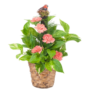 Decorated Pothos Pole Plant in Lexington, NC | RAE'S NORTH POINT FLORIST INC.