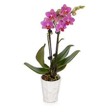 Decorative Orchid Potted Plant