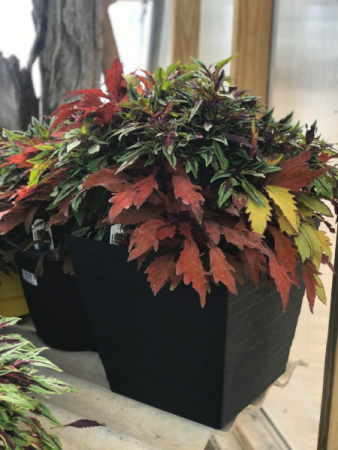Decorative Planter-Non Flowering