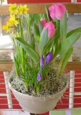 Decorative Spring Bulb Garden