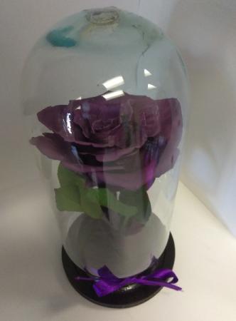 Deep Purple Enchanted Rose Rose
