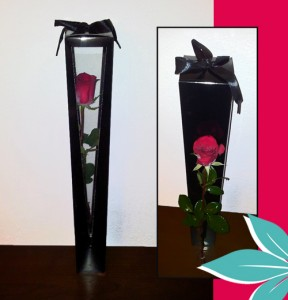 Deeply Devoted Single Long-Stem Rose