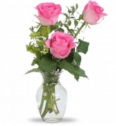 Delicate Pink Roses Same Day Delivery
