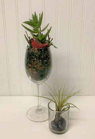 Delightful Bird Succulents/ set of 2