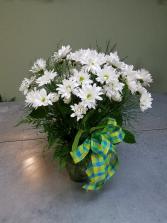 Delightful Daisies Vase Arrangement