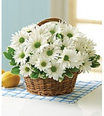 Delightful Daisy Fresh Arrangement