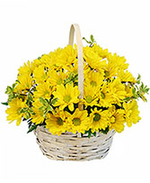 Delightful Smiles Basket of Daisies in Nassawadox, Virginia | Florist By The Sea