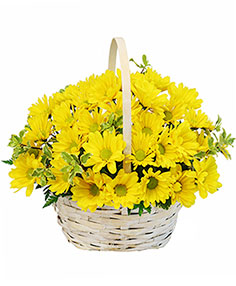 Delightful Smiles Basket of Daisies