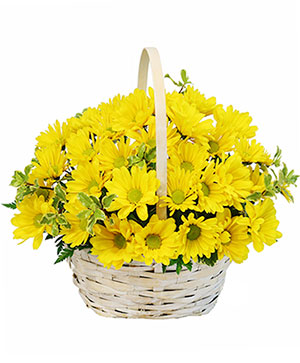 Delightful Smiles Basket of Daisies in Rowley, MA | COUNTRY GARDENS FLORIST