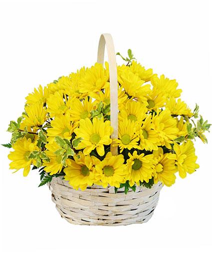 Delightful Smiles Basket of Daisies