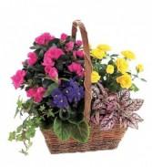 Delightul Blooms  Plant Basket