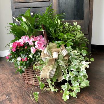 Deluxe Garden Basket Green & Blooming Plants