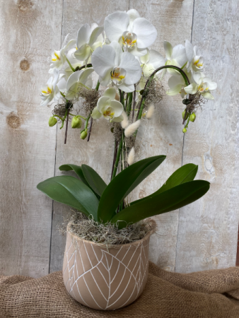 Deluxe Orchid  Planter