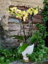 Deluxe Orchid Planter Phalaenopsis Orchids