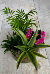 Tropical Assortment in Deluxe Container  Planter