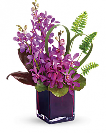 Dendro Orchids  Fresh Flowers