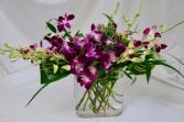 Dendrobium Fest Vase arrangement