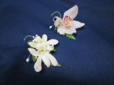 Dendrobium or Cymbidium Orchid Boutonnierres $12.50