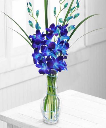 Dendrobium Orchid Bud Vase