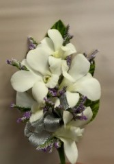 Dendrobium orchid with caspia