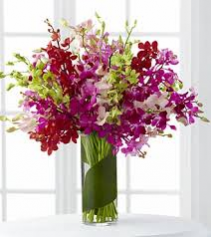 Dendromium Extravaganza Orchid Arrangement