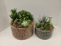 Desert Beauty Succulent Garden Signature Design