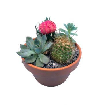 Desert Plant Dish Garden