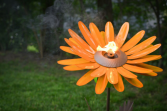 Desert Steel Garden Daisy