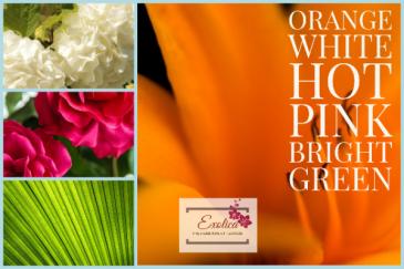 Orange Swirl Designer Choice