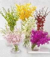 Designer choice vased orchids