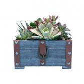 Designer Crate of Succulents