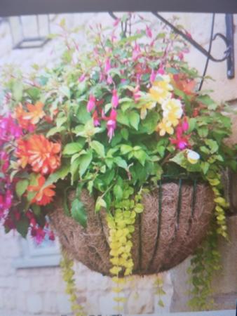 Designer Hanging Basket Outdoor