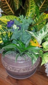 Designer Planter Garden Plants