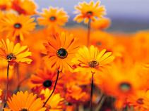Designer Special - BEST VALUE! Designer Choice Flowers