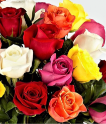 Designers Choice 12 Mixed Roses No Vase  12 Mixed Colored Roses No Vase