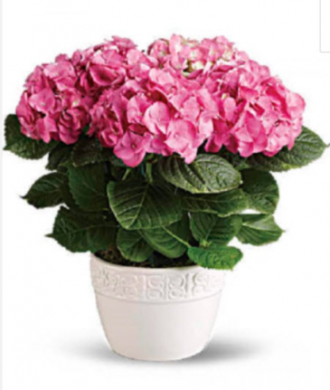 Designer's Choice Beautiful Spring Blooming Plant