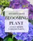 Designers Choice Blooming Plant