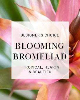 Designer's Choice Bromeliad