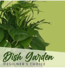Designer's Choice Dish Garden Assorted Plants