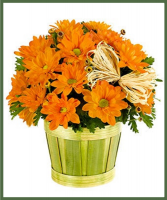 Designer's Choice Fall Blooming Mum Potted Plant