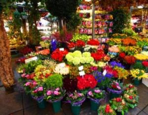 Designer's Choice The Freshest Market Flowers Arranged  in Charlotte, NC | FLOWERS PLUS