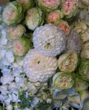 Designers Choice Holland Flowers  in Bethel, CT | BETHEL FLOWER MARKET OF STONY HILL