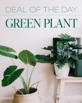 Designer's Choice of Plant