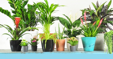 Designers Choice Planter Plants