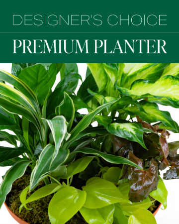 Designer's Choice Premium Planter Plant